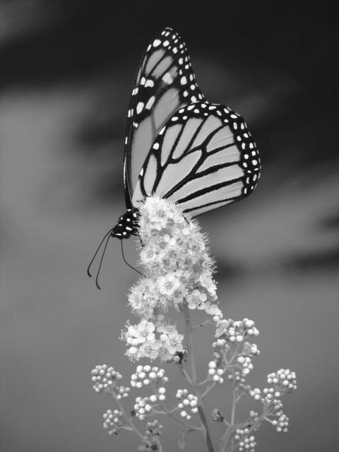 Images photos diverses noir et blanc - Photo romantique noir et blanc ...