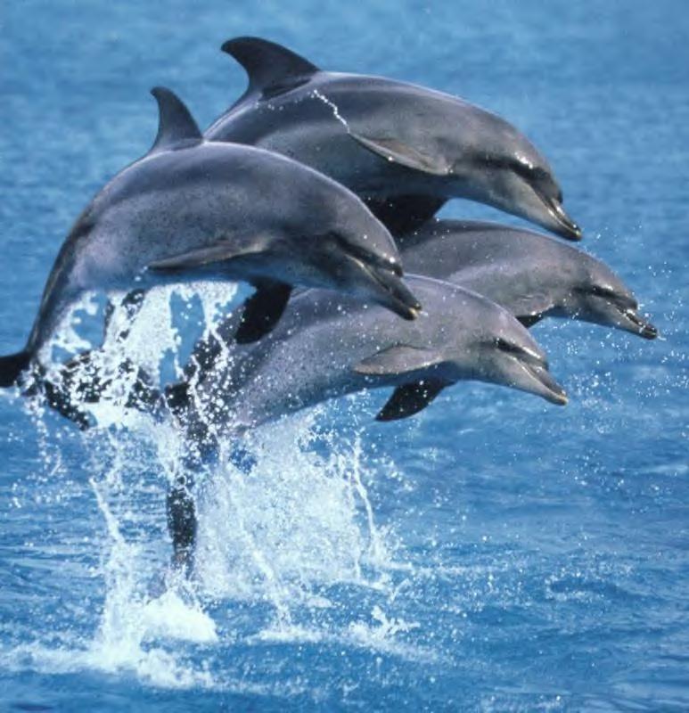 dauphins ( animal que j'adore )
